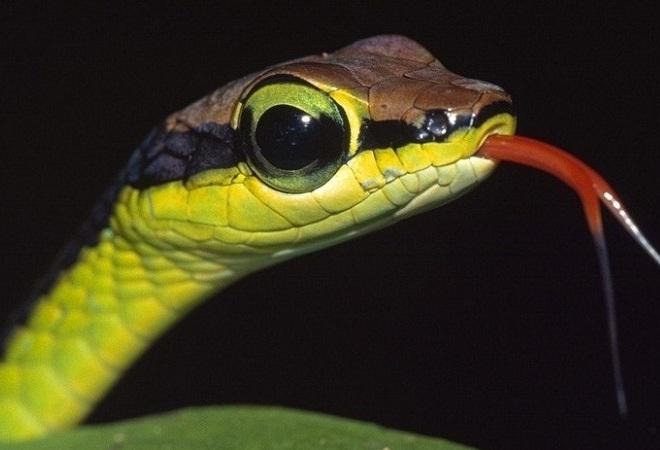 Конкурс «2013 год змеи»