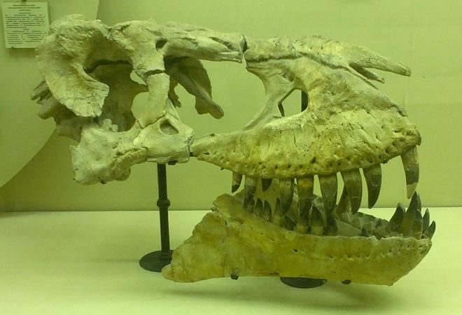 Экскурсия в музей: динозавры из прошлого