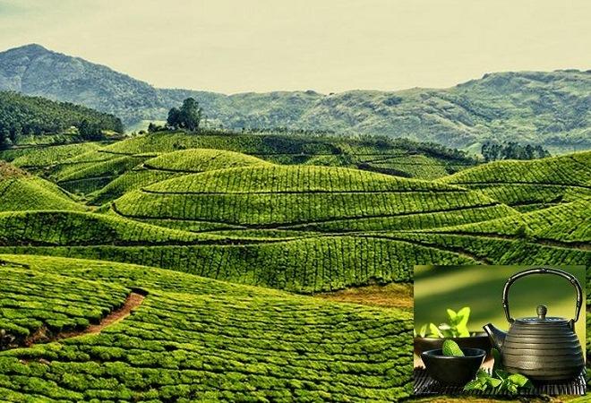 Великий чайный путь