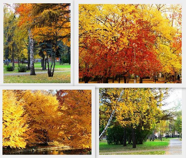 Золотая осень в парках и скверах города