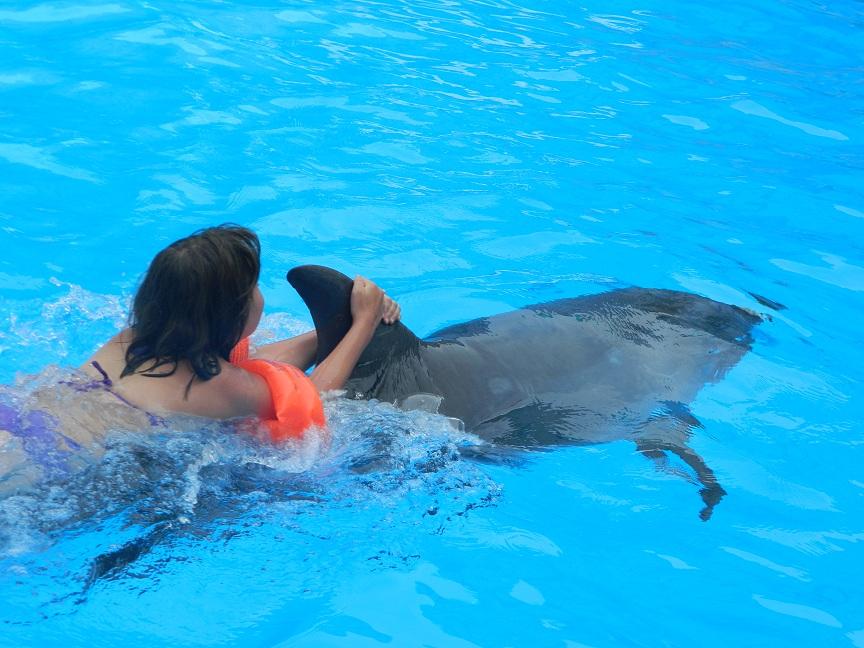 delfinarij-nemo-2