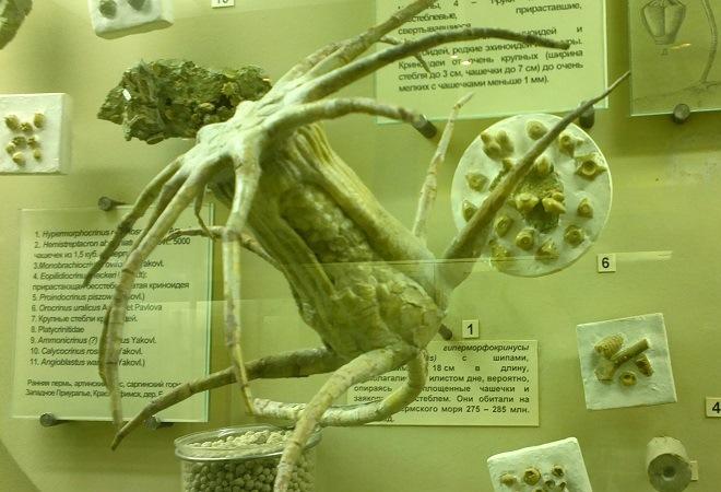 ekskursiya-v-muzej-dinozavry-iz-proshlogo