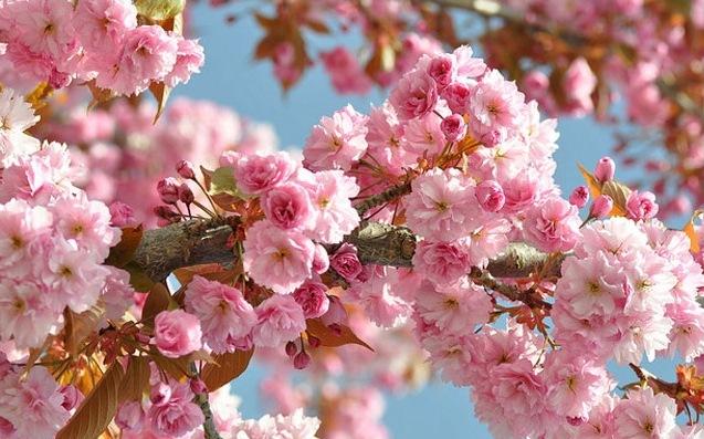 Праздник весны: Фестиваль цветов в Китае