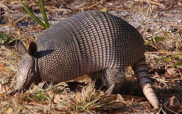 5 необычных животных из Южной Америки