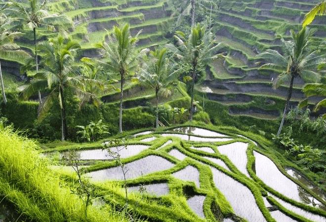 ostrov-bali