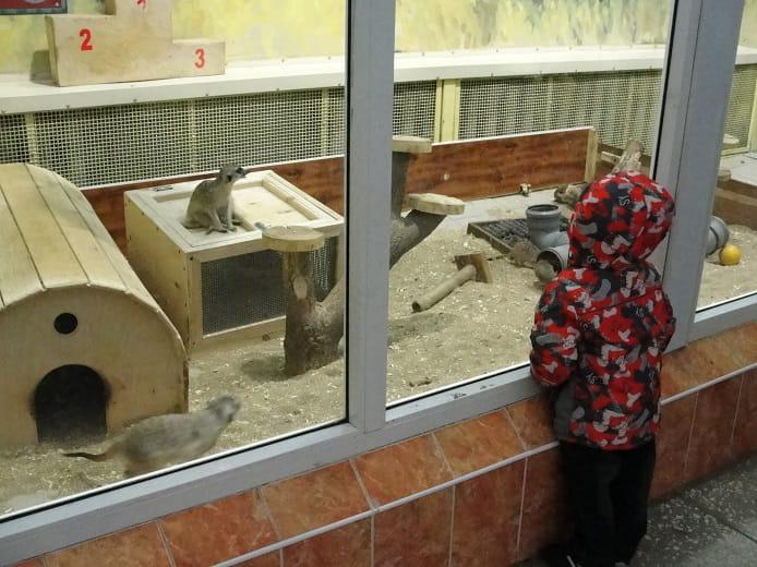 zoopark-tropicheskij-mir-na-okraine-parka