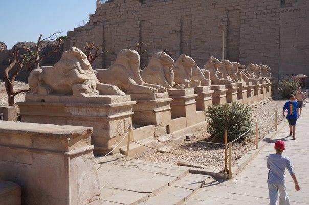 v-egipte